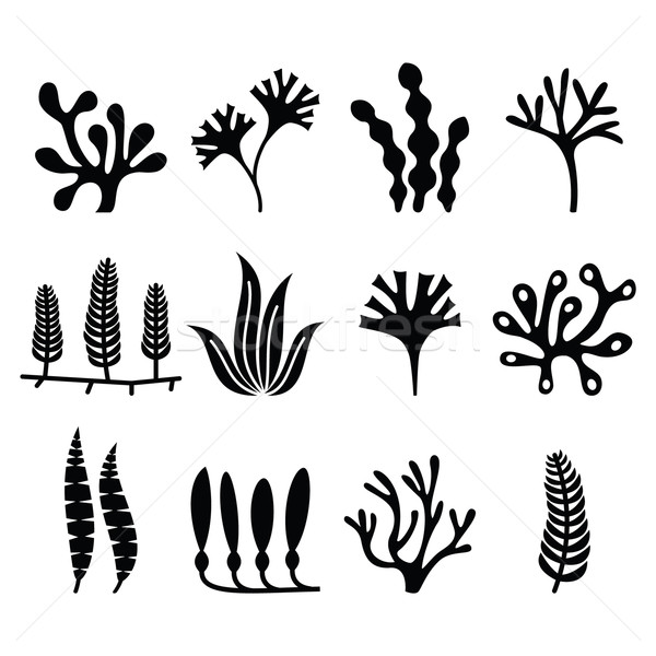 Seaweed icons set - nature, food trends concept  Stock photo © RedKoala