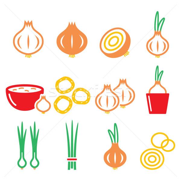Onion, spring onions colorful icons set  Stock photo © RedKoala