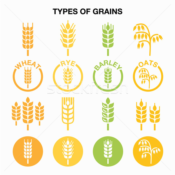 Types of grains, cereals icons - wheat, rye, barley, oats  Stock photo © RedKoala