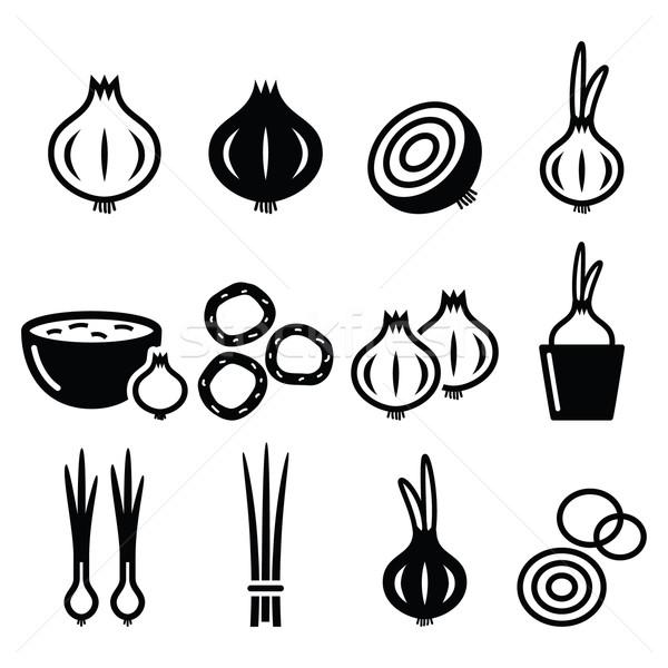 Onion, spring onions icons set  Stock photo © RedKoala