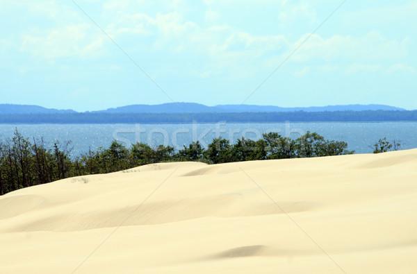 песок пейзаж лес морем синий завода Сток-фото © remik44992