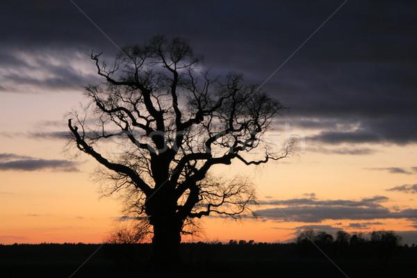 Eenzaam boom scène dramatisch hemel Stockfoto © remik44992
