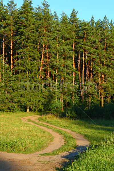 лет Солнечный сцена лес сельский дороги Сток-фото © remik44992