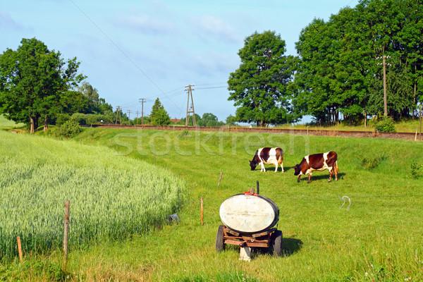 сельской сцене коров воды цистерна природы Сток-фото © remik44992