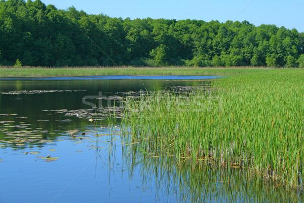 風景 湖 夏 シーン 森林 水 ストックフォト © remik44992