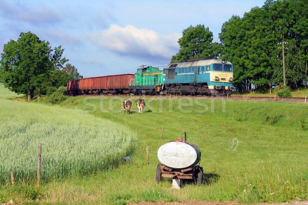 Scena rurale treno pesante vacche Foto d'archivio © remik44992