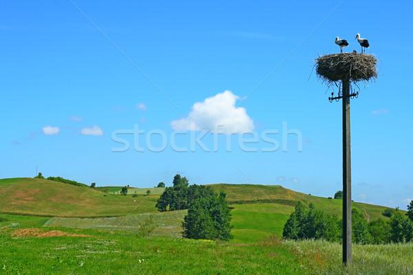 été paysage belle herbe domaine détendre Photo stock © remik44992