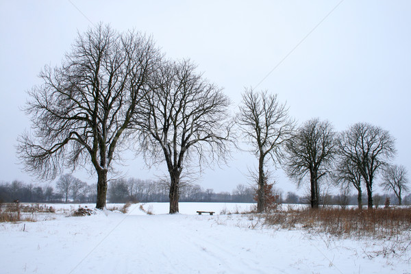 Hiver paysage solitaire arbres nature froid Photo stock © remik44992