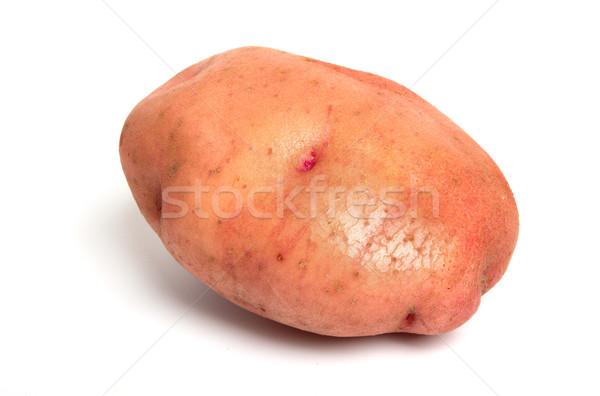 One Potato Stock photo © restyler