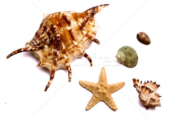 набор морем белый домой лет животные Сток-фото © restyler