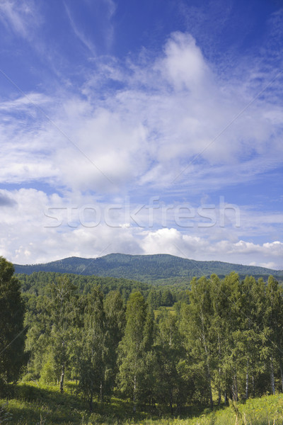 Landscape with the fine sky Stock photo © restyler