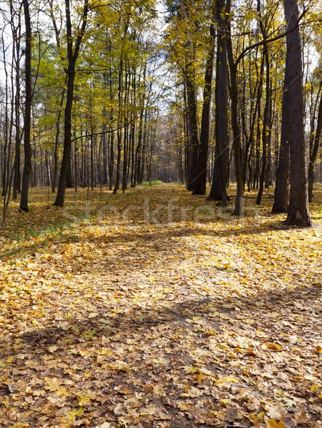 осень парка ходьбе город дерево лес Сток-фото © reticent