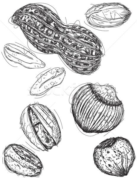 Amendoim castanha comida arte desenho Foto stock © retrostar