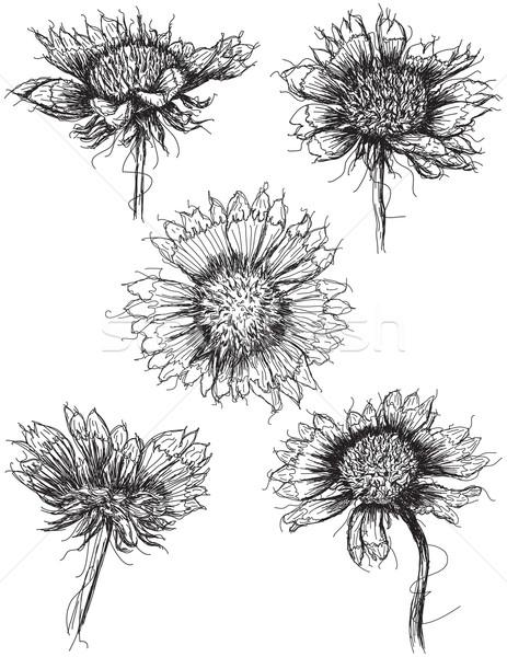 диких цветов цветок рисунок эскиз Blossom вектора Сток-фото © retrostar