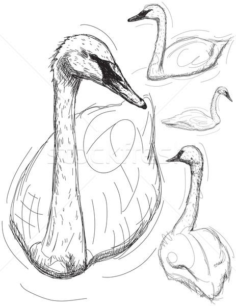 лебедя рисованной птица эскиз иллюстрация Сток-фото © retrostar