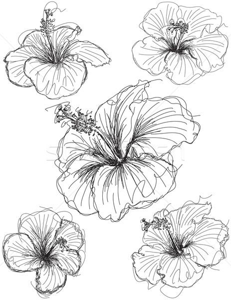 гибискуса цветок рисованной искусства завода рисунок Сток-фото © retrostar