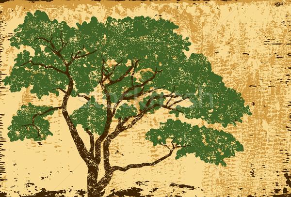 Carvalho árvore separado arte ambiente Foto stock © retrostar