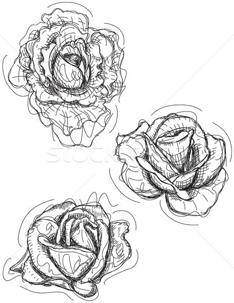 Rosa esboço folha planta desenho Foto stock © retrostar