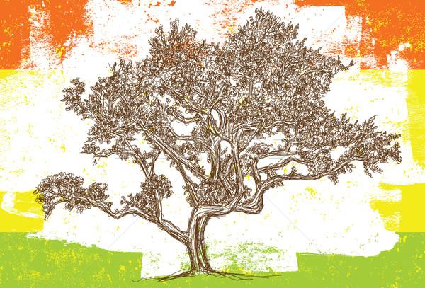 Sketchy Oak tree Stock photo © retrostar