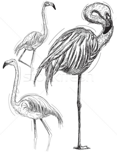 Arte aves dibujo flamenco boceto Foto stock © retrostar