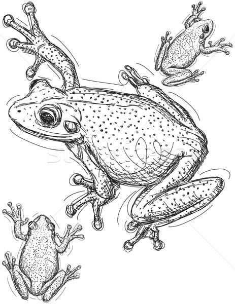 żaba sztuki zwierząt rysunek szkic wektora Zdjęcia stock © retrostar