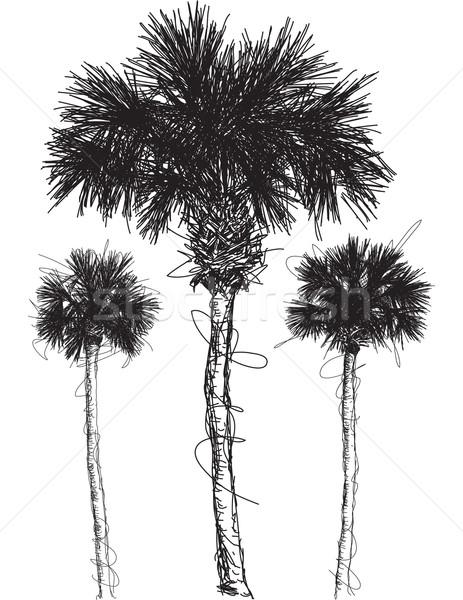 Palmera arte dibujo boceto vector clip art Foto stock © retrostar