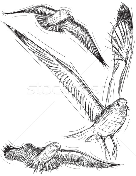 Seagull Drawings Stock photo © retrostar