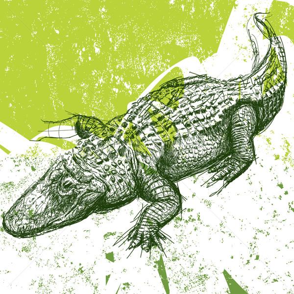 Alligator sketch  Stock photo © retrostar