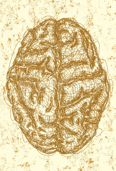 Brain  Stock photo © retrostar