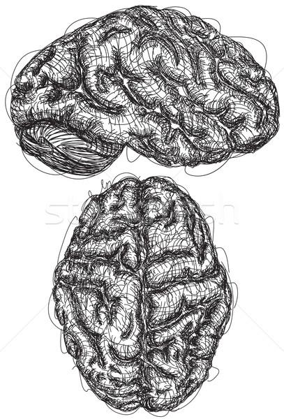 Mózgu szkic górę widok z boku sztuki nauki Zdjęcia stock © retrostar