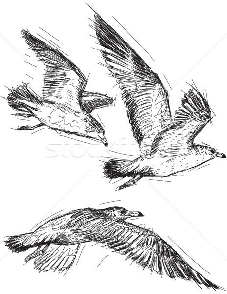 Vuelo gaviotas aves dibujo boceto vector Foto stock © retrostar