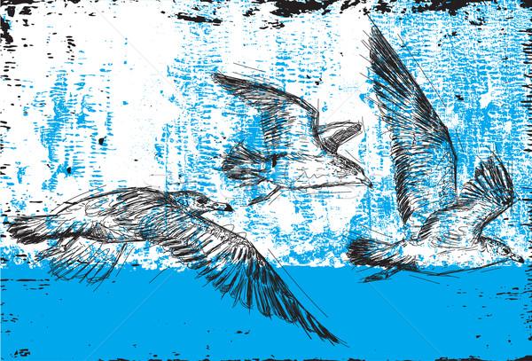 ストックフォト: カモメ · 飛行 · 抽象的な · 鳥