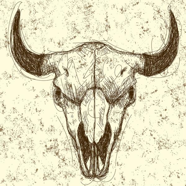 Vache crâne dessin résumé séparé Photo stock © retrostar