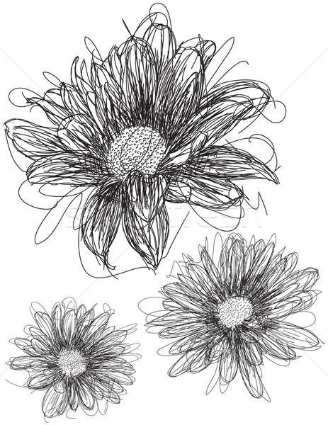 Daisy ligne art trois marguerites nature Photo stock © retrostar