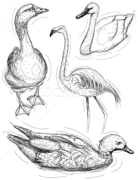 Water bird sketches Stock photo © retrostar