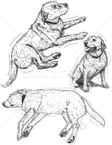 Лабрадор ретривер собака рисунок сидят эскиз иллюстрация Сток-фото © retrostar