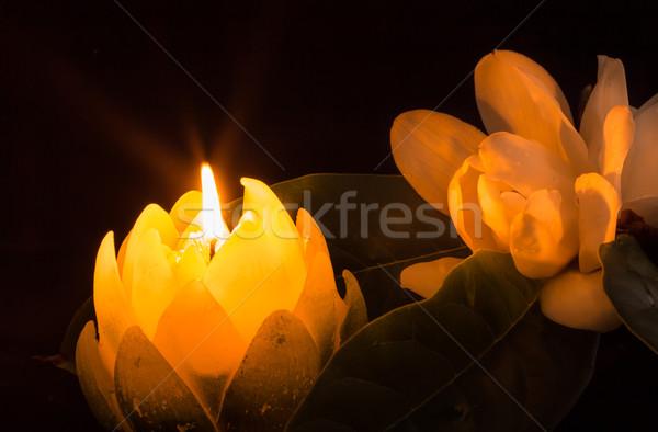 Magnolia luz de una vela vela forma flor hoja verde Foto stock © rghenry