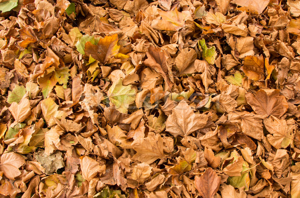 Autumn Leaf Texture Stock photo © rghenry