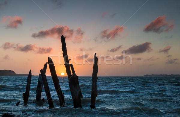 Sunset Tree Posts Stock photo © rghenry