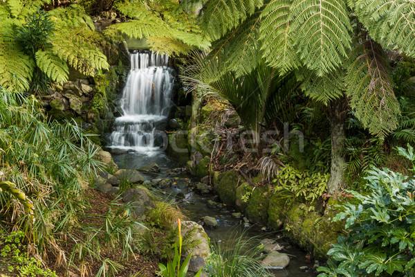 водопада саду замечательный зеленый воды Сток-фото © rghenry