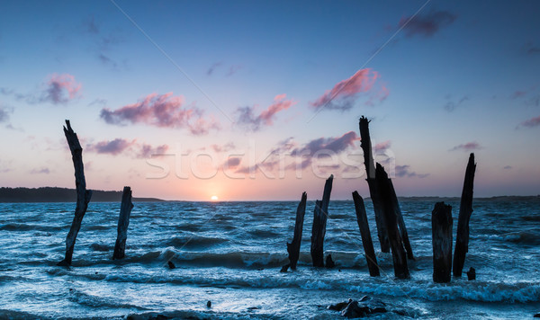 Fa naplemente öreg fák tenger Stock fotó © rghenry