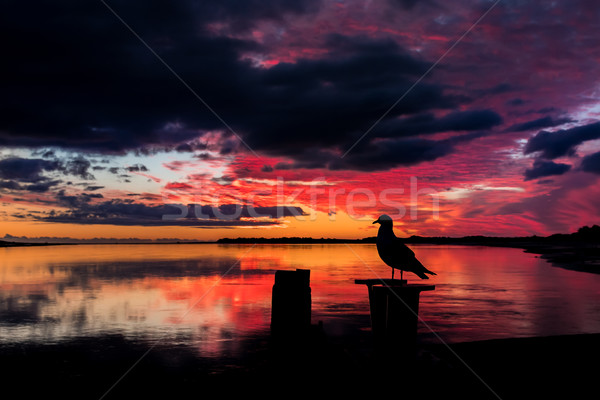 Bird of Sunset Stock photo © rghenry
