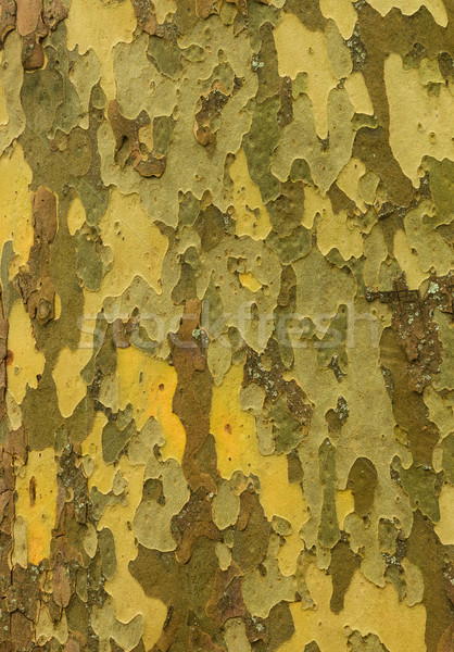 Patch Tree Textue Stock photo © rghenry