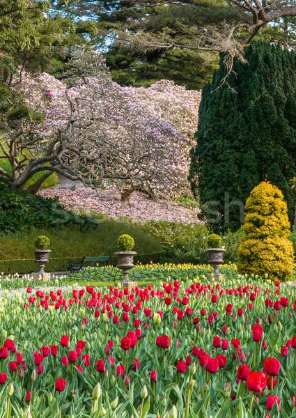 Tulpen tuin prachtig Rood voorjaar openbare Stockfoto © rghenry