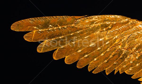金属 翼 外に ストックフォト © rghenry