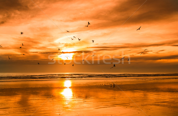 Beach Bird Sunset Stock photo © rghenry