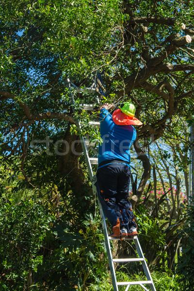 дерево человека вверх лестнице Сток-фото © rghenry