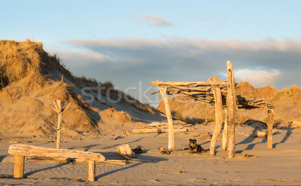 Beach Dog House Stock photo © rghenry