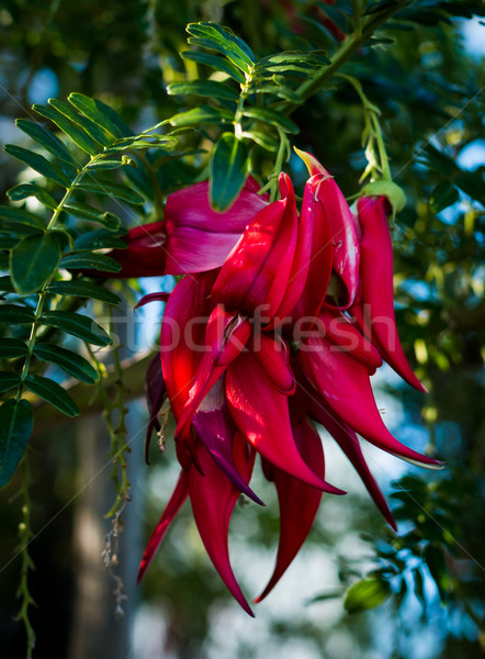 Fiore nome becco impianto pappagalli bill Foto d'archivio © rghenry