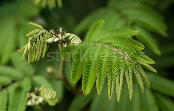 工場 葉 素晴らしい 自然 テクスチャ ストックフォト © rghenry